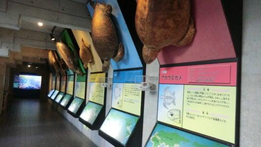 世界中のウミガメを紹介