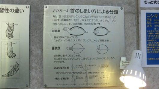 カメに関する情報