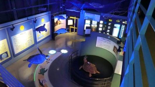 ウミガメの生態エリア