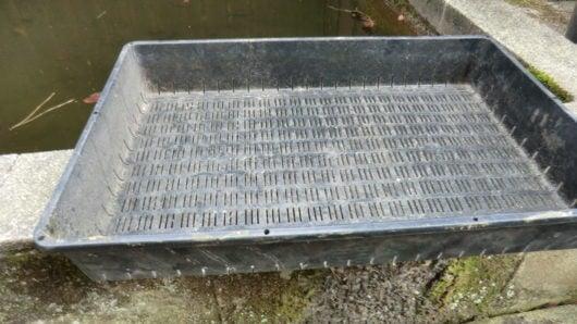 育苗箱で水抜き