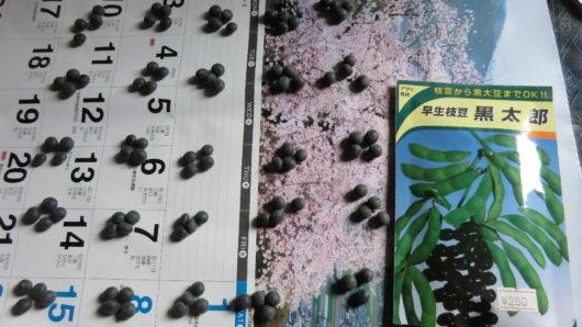 黒枝豆の種袋