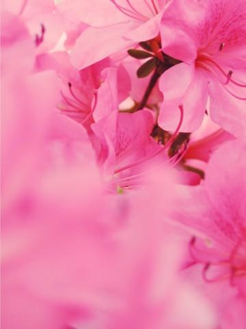 この6月時期に咲く花