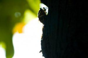 木にとまるセミの影