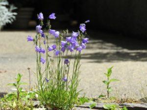 紫色の可愛い花