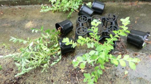 台風の大風で鉢が倒れる