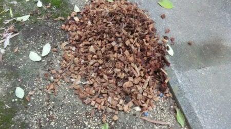 土の上にこぼれたハスクチップ。
