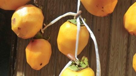 吊った干し柿のアップ画像。