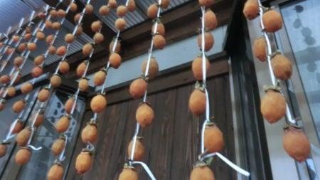 吊ってから1週間後の干し柿。