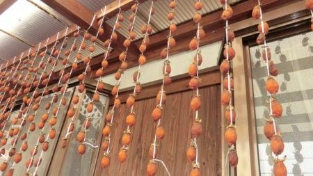 吊ってから2週間後の干し柿。カビに気を付ける。