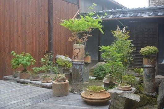 bonsai and japanese garden