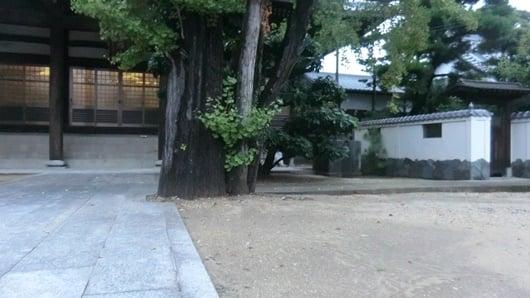 雨が降ると葉が落ちる。寺の法要前